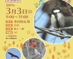 野鳥の観察会チラシA4